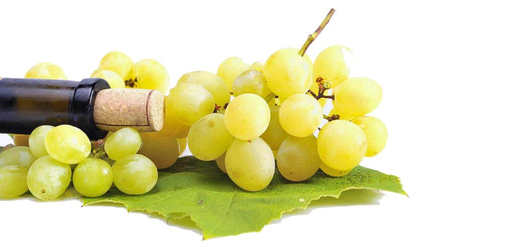 vinoblancouvass